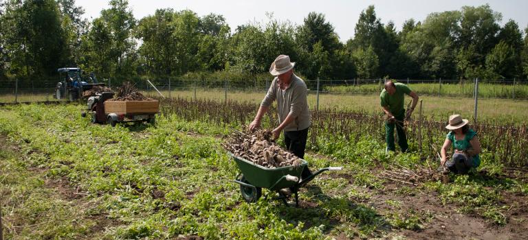 Fast immer auf dem Feld: Erwin Weßling baut Knoblauch an und vermarktet ihn bereits erfolgreich.